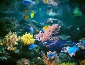 Underwater world. — Stock Photo