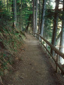 The path in the mountain forest. — Stock Photo