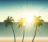 Palm trees silhouette at sunset — Stock Vector