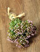 Orégano flor — Foto de Stock