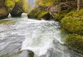 Arroyo de bosque de otoño — Foto de Stock