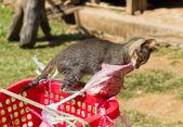 Gatto tenta di rubare la carne — Foto Stock