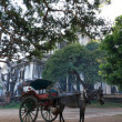 Horse carriage in Burma — Stock Photo #27634405