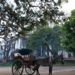Stock Photo: Horse carriage in Burma