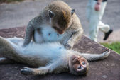 Lazy monkeys playing — Stockfoto