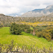 Green hills and granite mountains in Crete — Stock Photo #17647075