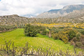 Green hills and granite mountains in Crete — Stock Photo