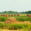 Summer field with rolls of straw — Stock Photo