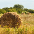 Stock Photo: Harvested field with rolls of straw