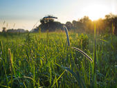 緑の草原と初夏の朝を表示します。 — ストック写真