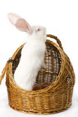 White albino rabbit in basket — Stock Photo