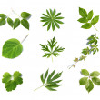 Green leaves collection — Stock Photo