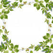 Fresh green leaves border on white - Stock Photo