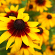 Close up view of a beautiful yellow cone flower - Stock Photo