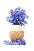 Blue flowers in the vase — Stock Photo