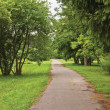 Old pathway in woods, aged weathered tarmac asphalt trail, large arboretum, peaceful tranquil verdant garden park walk pavement, various forest trees bushes shrubs vertical greenery sidewalk landscape — Stockfoto