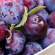 Plums in basket — Stock Photo #12129407