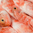 Redfishes — Stock Photo #19367651