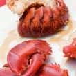 lobster closeup — Stock Photo