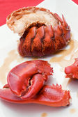 Lobster closeup — Stock Photo