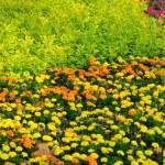 ������, ������: Garden