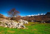 Panoramic mountain — Stock Photo