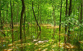 Träd i träsket — Stockfoto