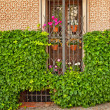 Nice window with flowers in Cordoba — Stock Photo