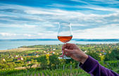 Nice vineyard — Stock Photo