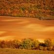 Field with tree in autumn — Stock Photo