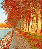 Jesienny sceny z jeziora — Zdjęcie stockowe