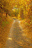 Road with leaves in autumn — Stock Photo