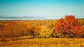 Fältet med träd — Stockfoto