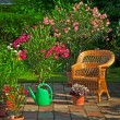 Nice oleanders in the garden — Stock Photo