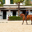 Foundation Royal Andalusian School of Equestrian Art — 图库照片