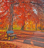 Nice autumnal scene — Stock Photo