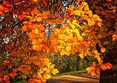 Nice autumnal scene — Stockfoto