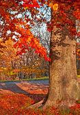 Nice autumnal scene — ストック写真
