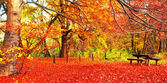 Nice autumnal scene — Stock Photo