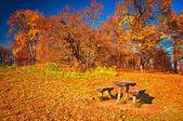 Nice autumnal scene — Foto Stock
