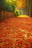 Autumnal scene — Stock Photo