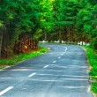 Road in the forest — Stock Photo #36545051