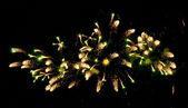 Fireworks — Foto de Stock