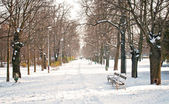 Park in winter — Photo
