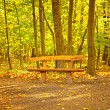 Nice autumnal scene in park — Stock Photo #37708969