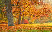 Nice autumnal scene in the park — Foto Stock