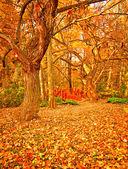 Parkta güzel sonbahar sahne — Stok fotoğraf