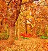 Nice autumnal scene in the park — Stock Photo