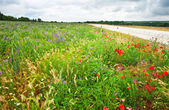 Nice field with flowers — Stock Photo