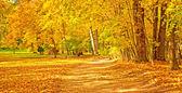 Podzimní scéna — Stock fotografie